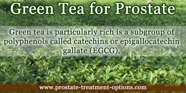 green tea for prostate