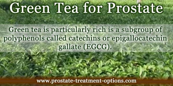 green tea for prostate
